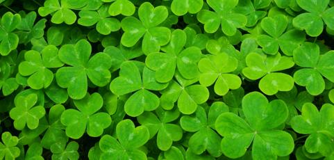 Ako sa oslavuje St. Patrick's Day