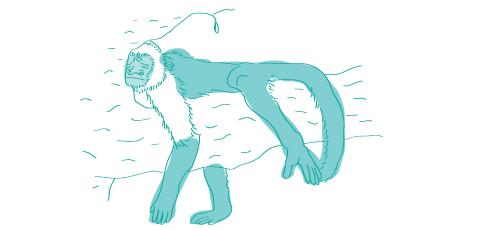 Vyspať opicu - ako sa to povie po anglicky?