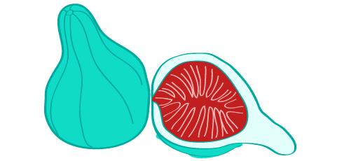 Vieš o tom figu borovú!